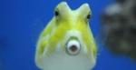 member-discount - Aquarium