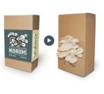 Mushroom Factory - The Mushroom factory